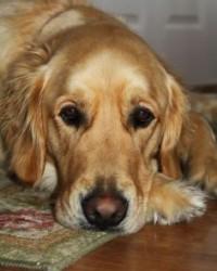 Amit nem érdemes hazacipelni: száraz kutyatáp