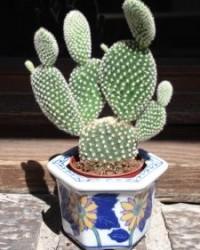 A kaktuszok gondozásáról