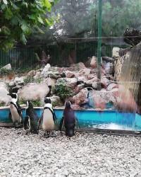 A Jászberényi Állatkert