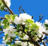 Tavaszi kerti munkák – kezdjen neki időben!